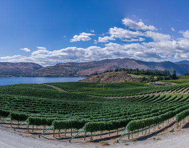 columbia river gorge winery